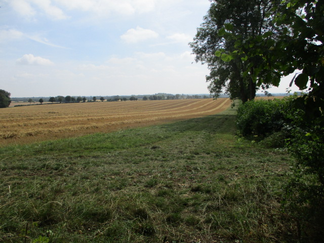 It's a big field