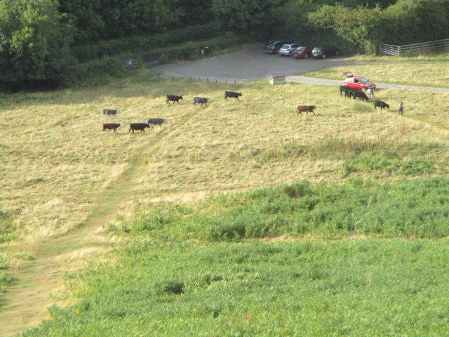 The cattle below seem to see something of interest