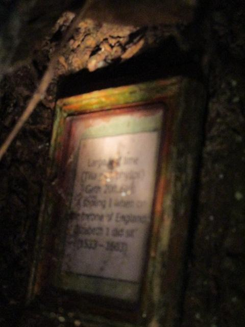 It's not easy balancing on a bank with a camera and torch and trying to focus, but the gist of this plaque in a cleft in that tree is that it was here in the reign of Elizabeth 1