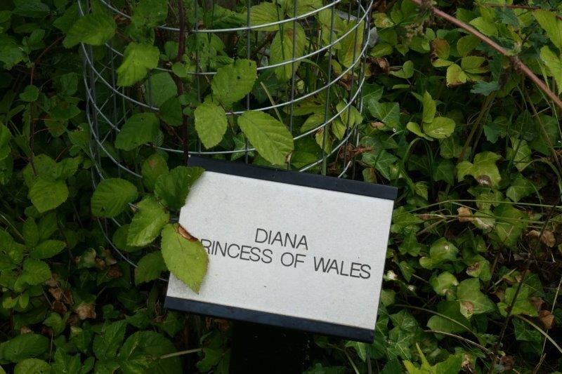 Then a short road walk takes us past a sort of memorial to Diana