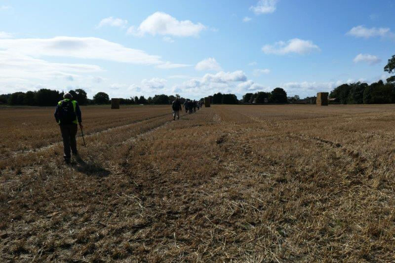 Followed by fields of straw bales awaiting collection