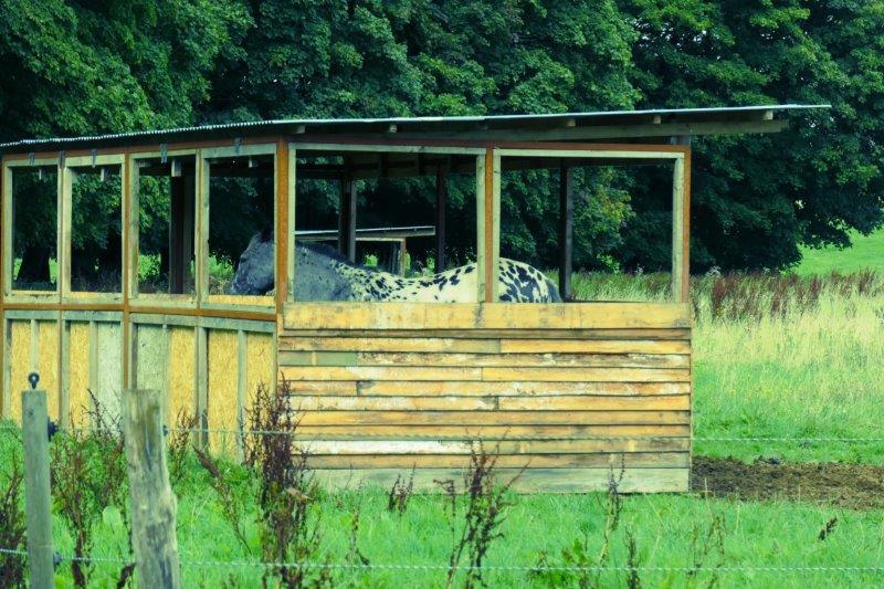 A spotty horse in quarantine