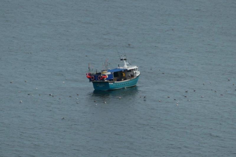 We spot a pleasure boat seal spotting, possibly from Scarborough