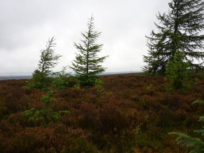 And miles of heather