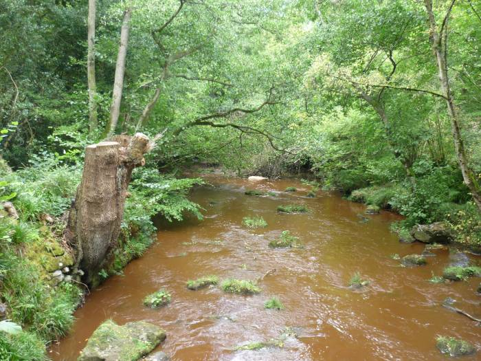 The brown silt in the stream