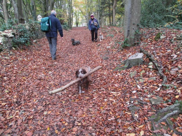 We meet a small dog with a big stick