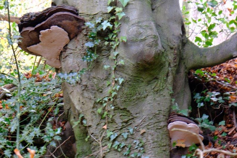 Interesting fungus growing on this tree