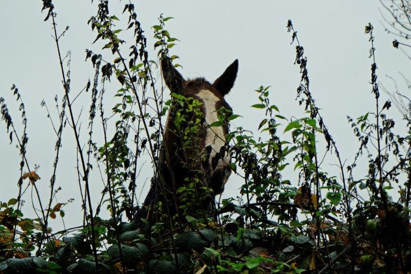 Who is that looking over the hedge?