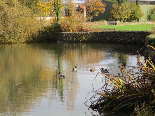And the duckpond
