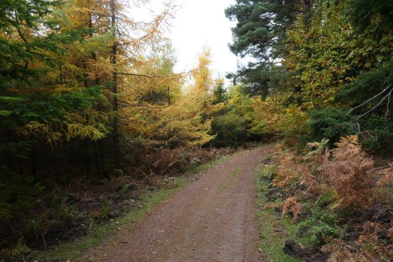 Plenty of Autumn colour