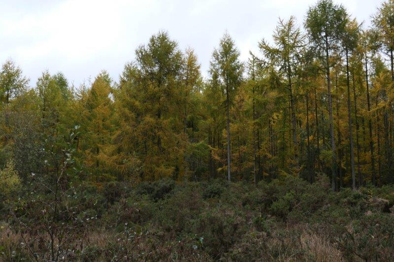 More colourful trees