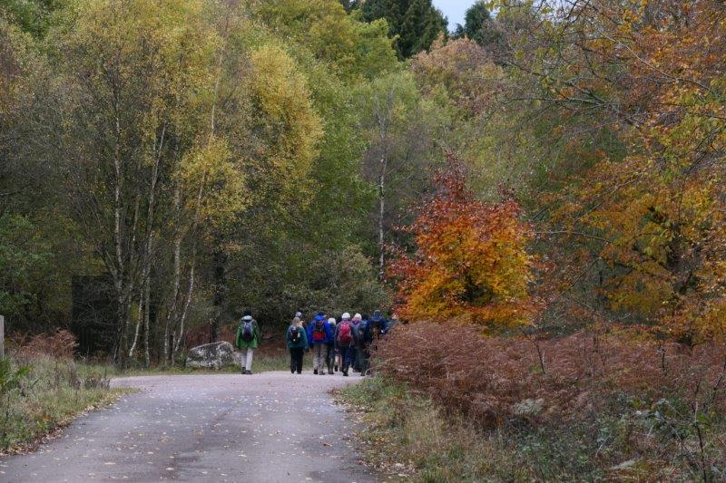 And our route following a forest road
