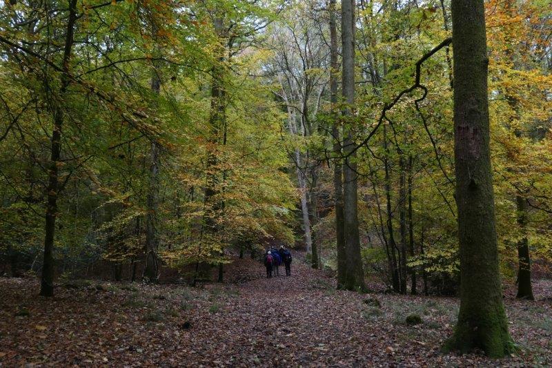 More beechwoods