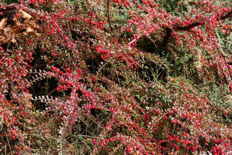 Should be red berries there somewhere