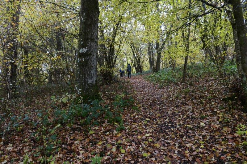 A woodland walk. It's still raining
