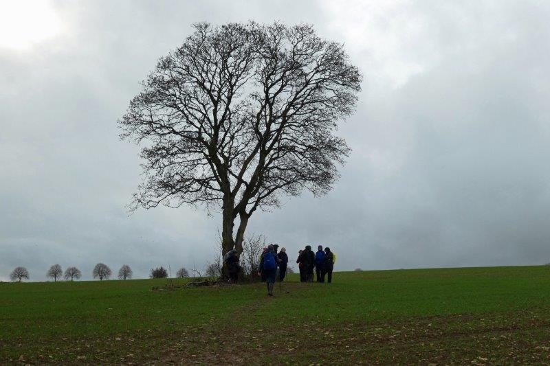 Starting to brighten as we approach a solitary tree