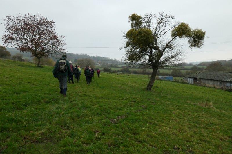 Past a mistletoe laden tree