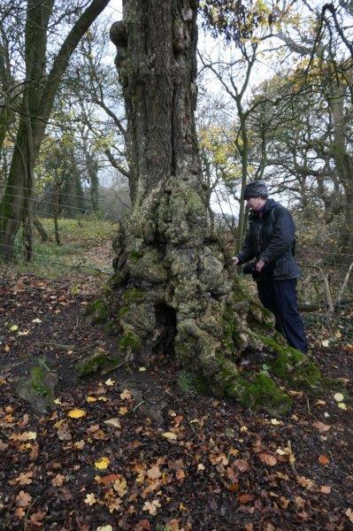 Franceska examines an old tree