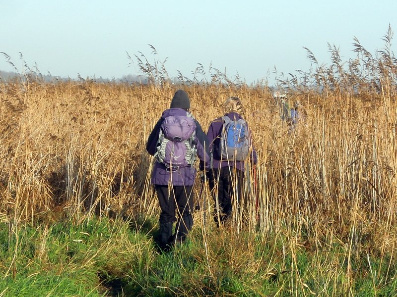 On our return some of us go through the reeds