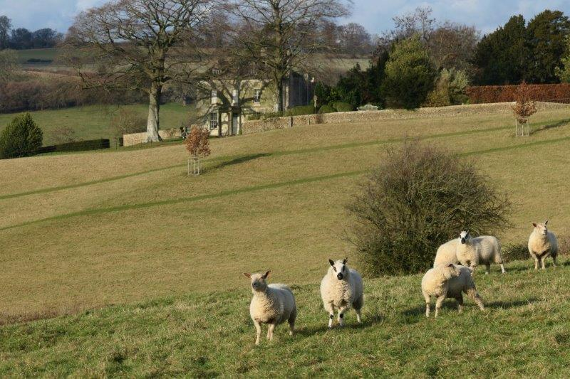 Then a field of sheep