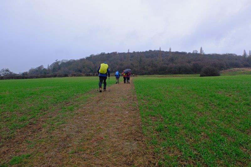 Towards Robinswood