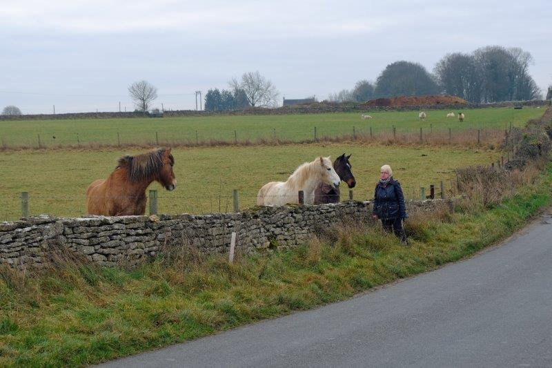 Stop to talk to horses