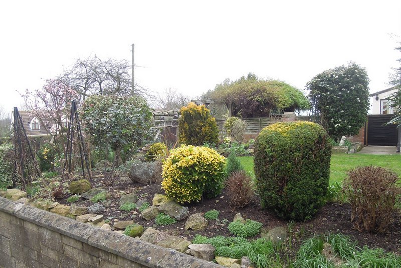 And shrubs