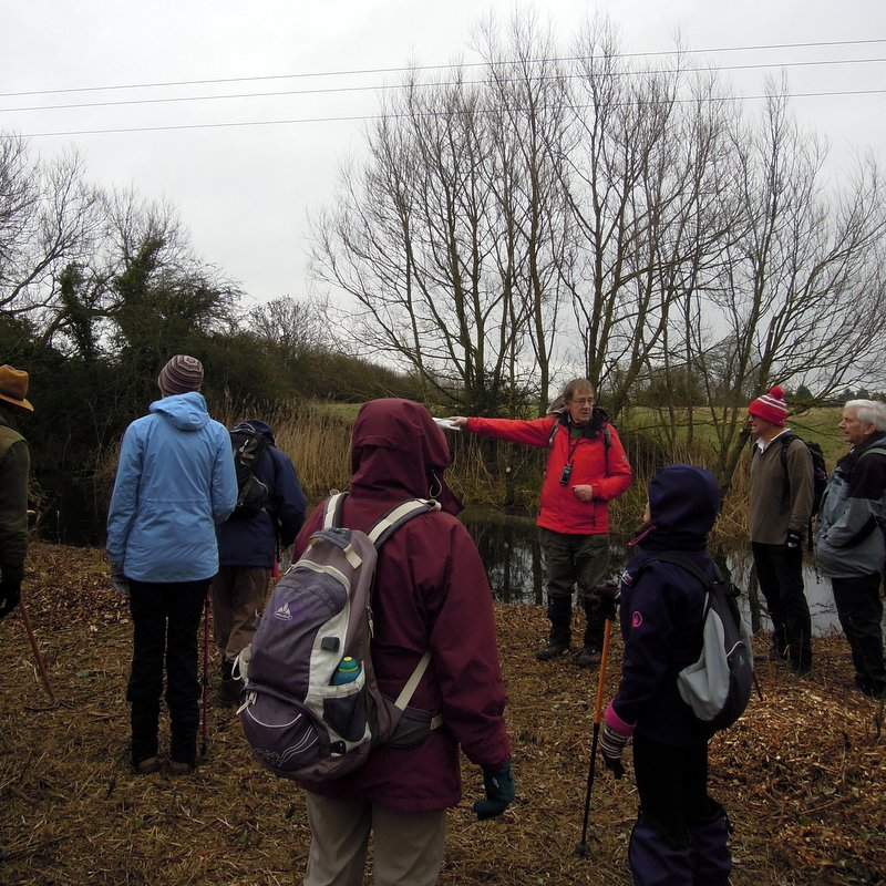 Patrick tells about the volunteers clearing overgrown trees near the powerline