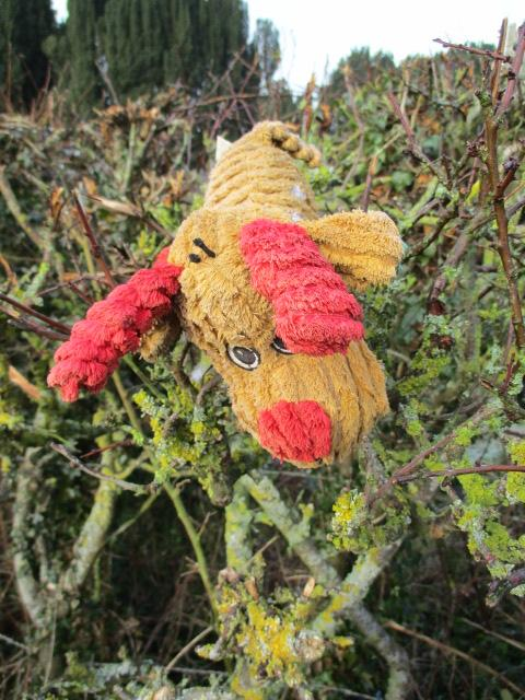 Someone's much loved toy in the hedge