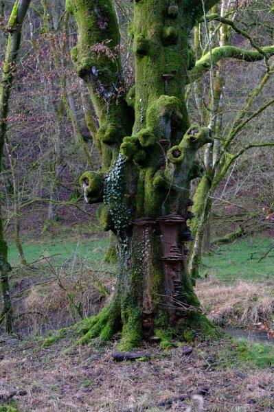 Past an old gnarled tree