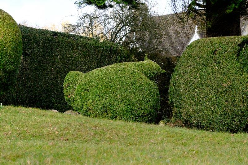 Interesting bit of topiary - not sure what it is meant to be