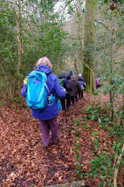 Then down a steep slope into Cranham Woods