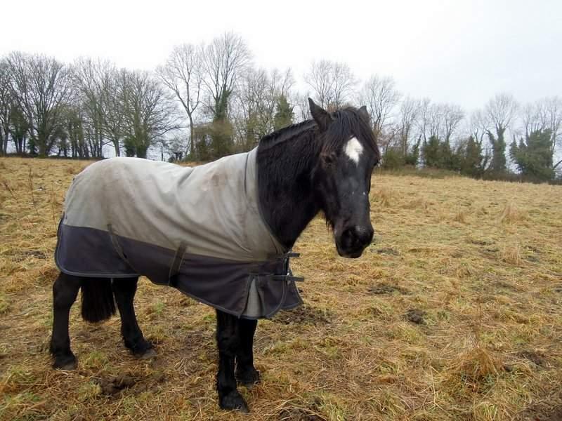 Do you like my coat?