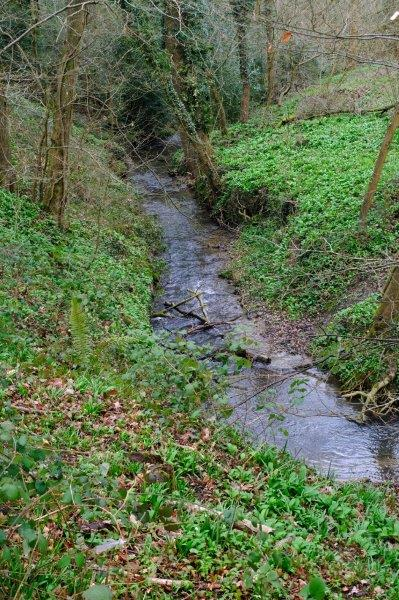 The Painswick stream gurgles down in the valley
