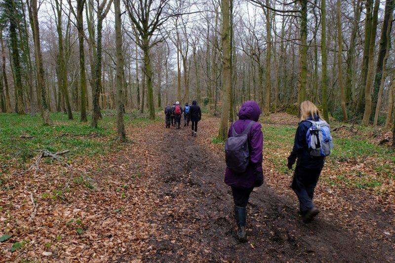 Where we follow a woodland track
