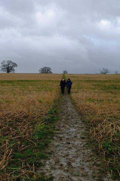 Another stubble field but a good path crossing it