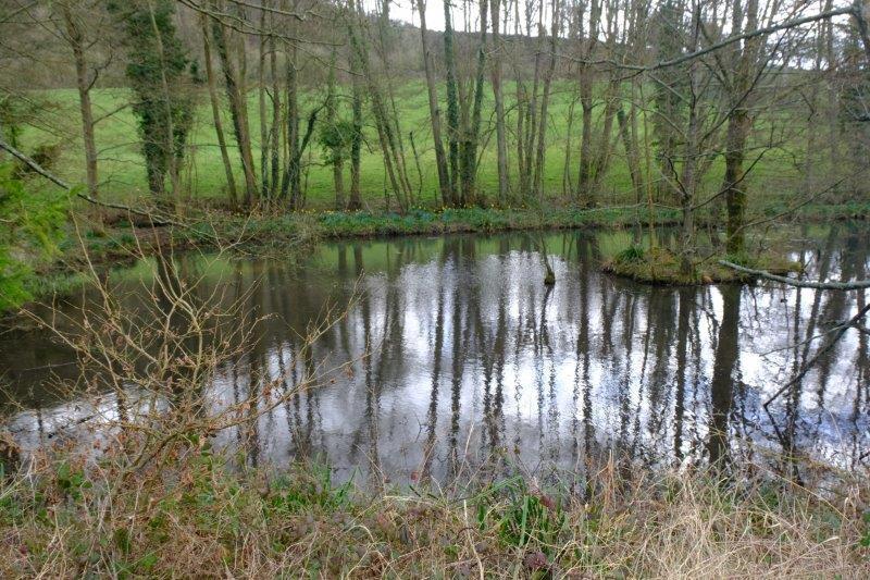 The pond at Steanbridge