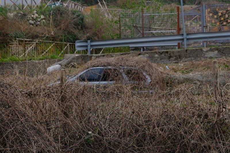 An overgrown car