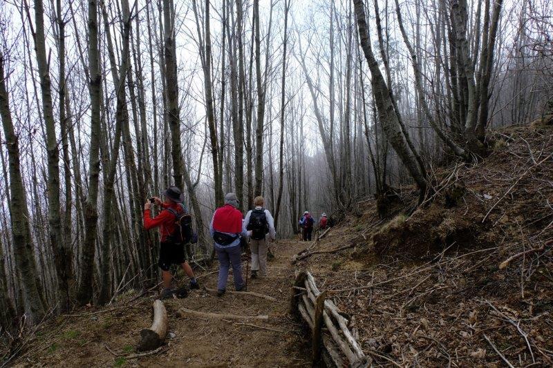 Descending through the woods