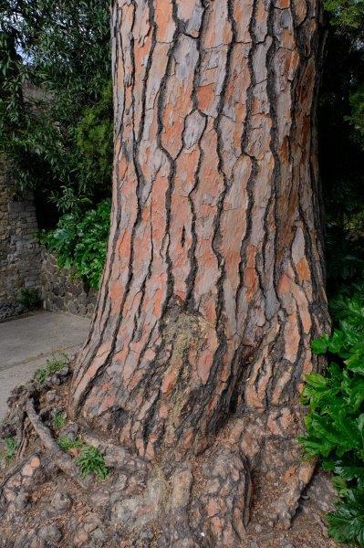 Unusual bark