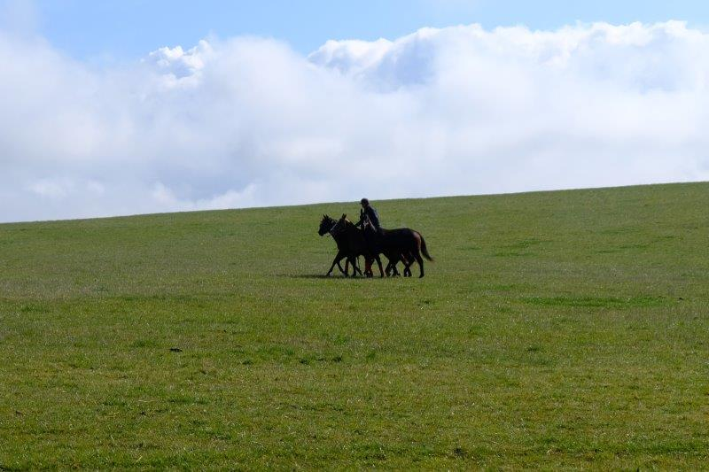 Horses being exercised