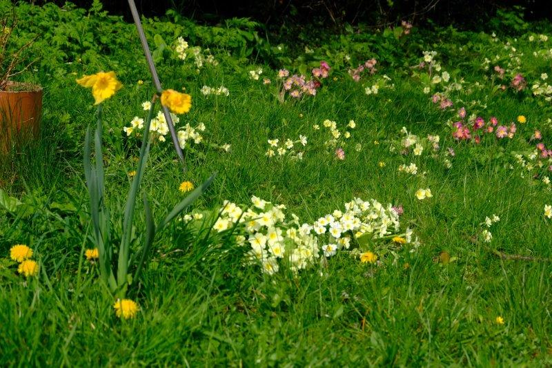 A good display of Spring flowers