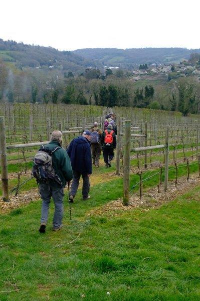 Down through the vineyard