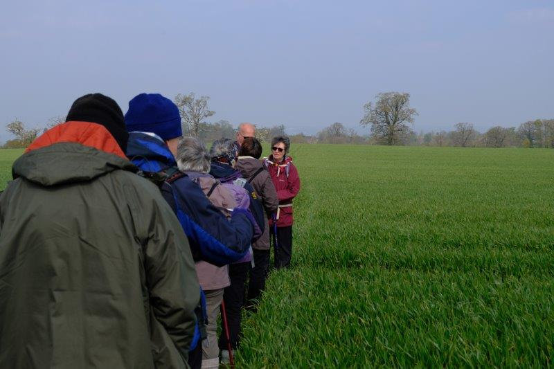 Ann ensures that we are walking single file through the growing crops