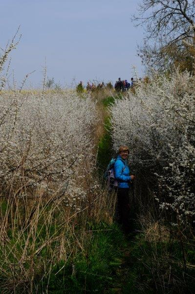 Before we head uphill through more blackthorn
