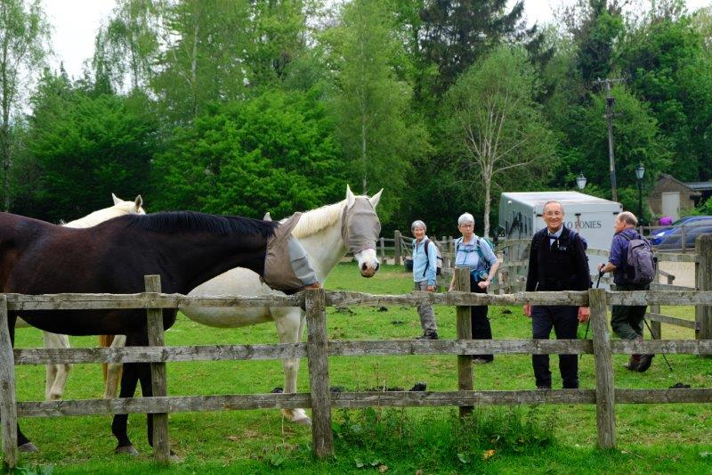 Accosted by horses