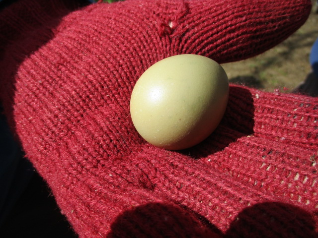 Found during our coffee stop. Is it a pheasant's egg?