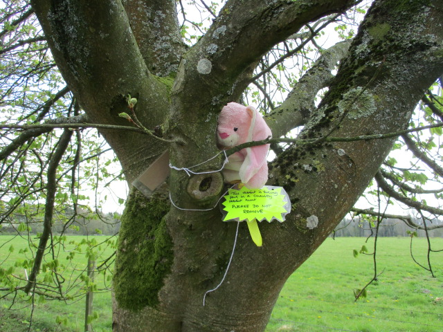 It's Bisley Easter Bunny trail