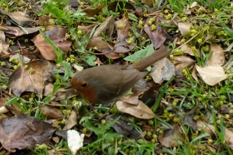 Sitting outside eating our lunch we are approached by a robin