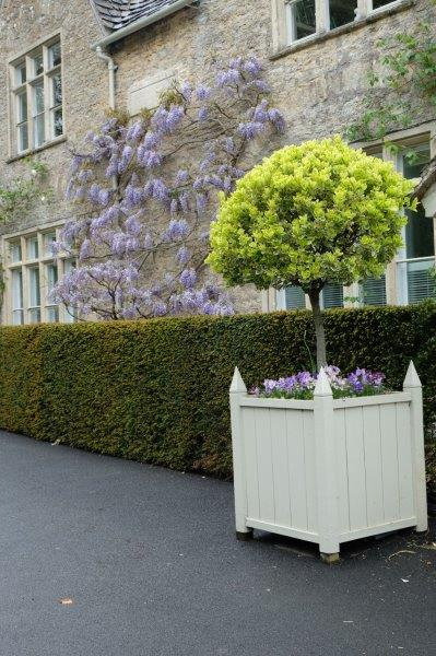 Wisteria looking good
